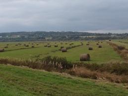 Hayfields on the marsh