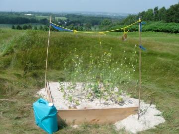 View at plot 1.